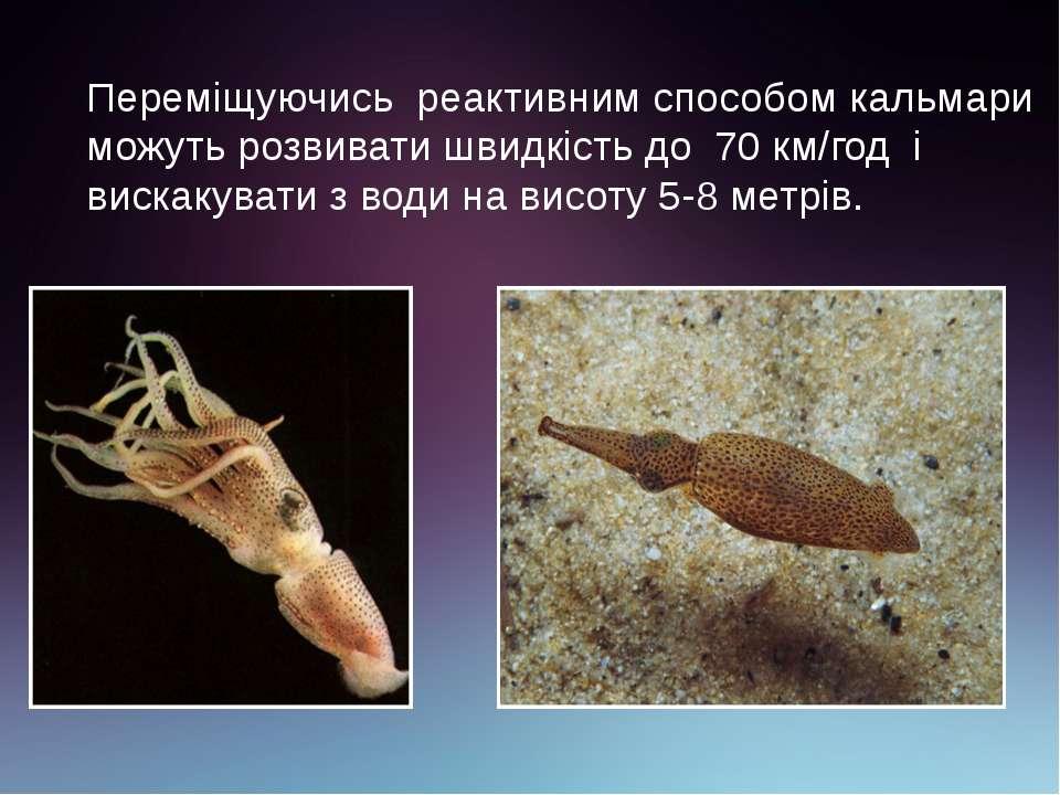 Переміщуючись реактивним способом кальмари можуть розвивати швидкість до 70 к...