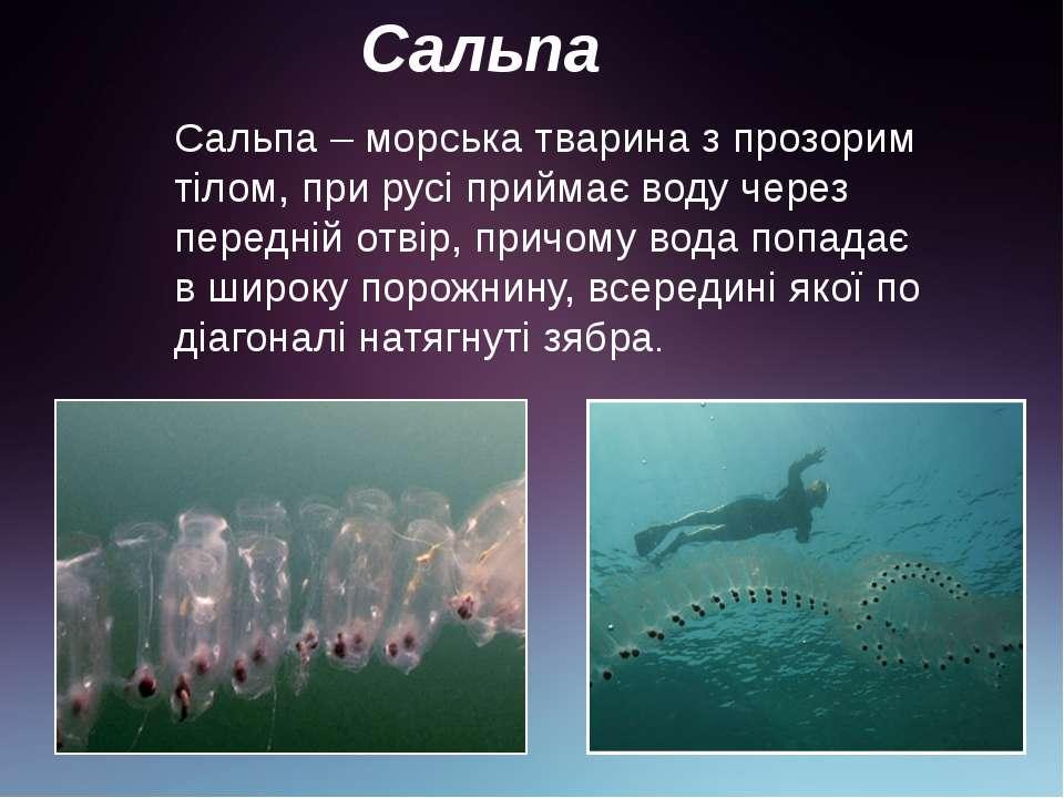Сальпа Сальпа – морська тварина з прозорим тілом, при русі приймає воду через...