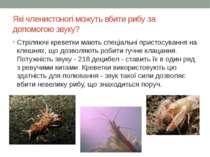 Які членистоногі можуть вбити рибу за допомогою звуку? Стріляючі креветки маю...