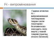 ІЧ - випромінювання Гадюка вловлює ІЧ – випромінювання теплокровних тварин св...