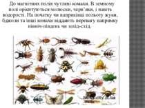До магнітних полів чутливі комахи. В земному полі орієнтуються молюски, черв'...