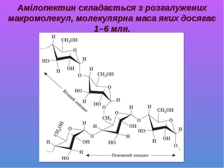 Амілопектин складається з розгалужених макромолекул, молекулярна маса яких до...