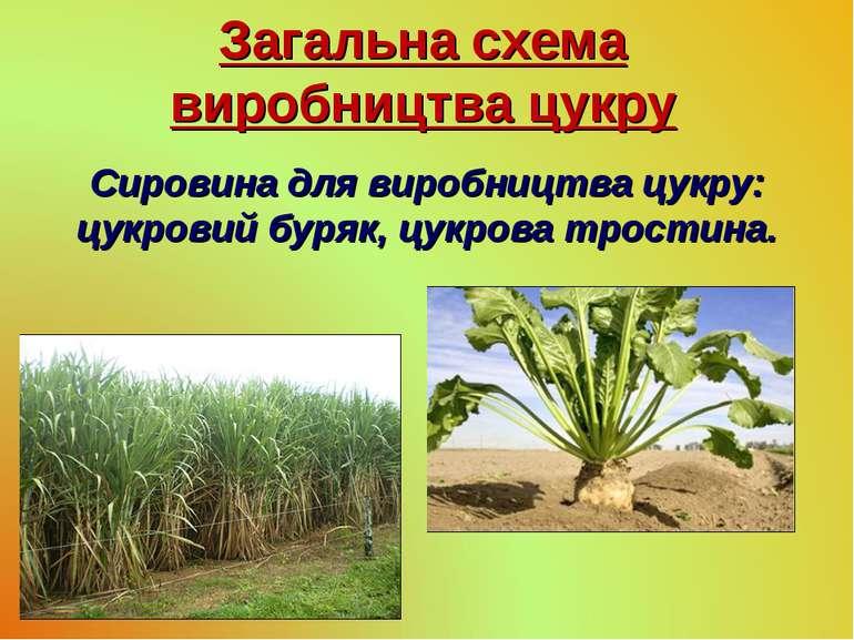 Загальна схема виробництва цукру Сировина для виробництва цукру: цукровий бур...