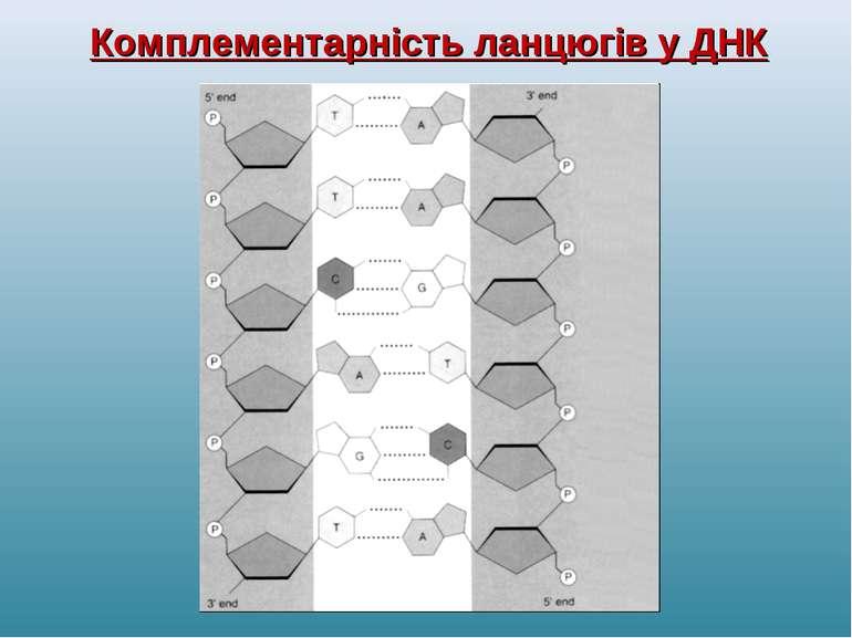 Комплементарність ланцюгів у ДНК