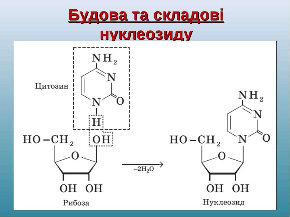 Будова та складові нуклеозиду