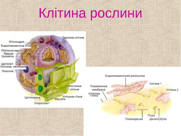 Клітина рослини