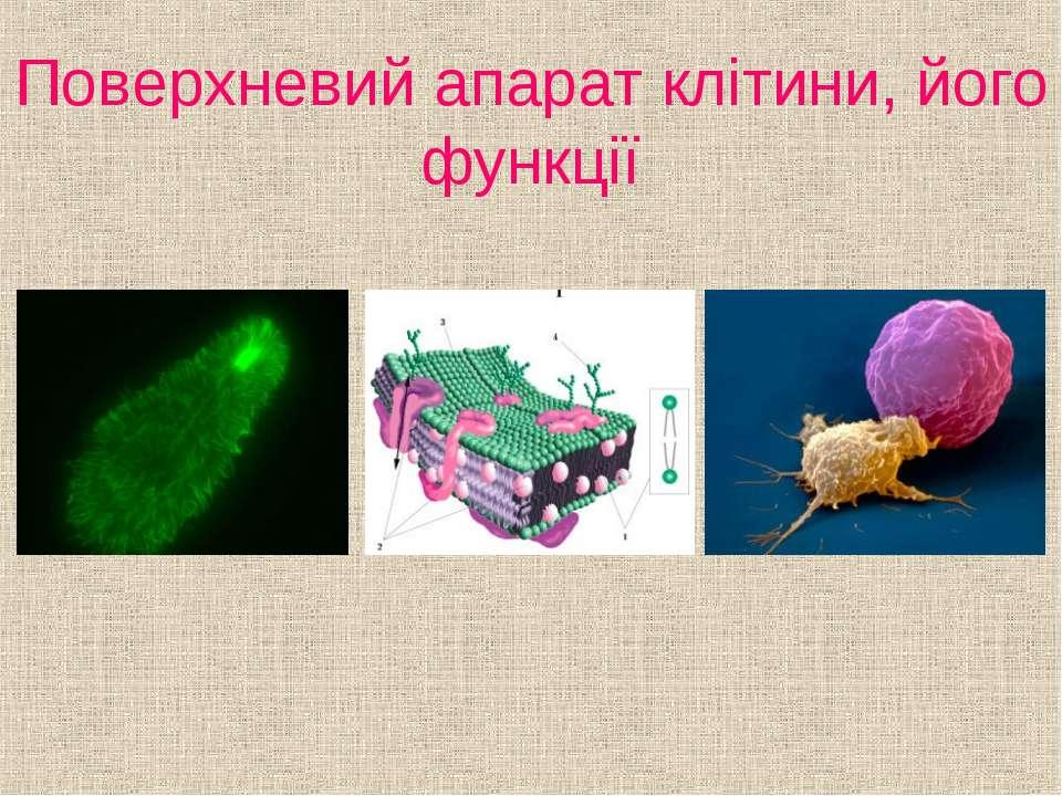 Поверхневий апарат клітини, його функції