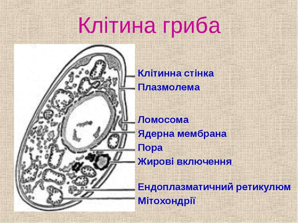 Клітина гриба Клітинна стінка Плазмолема Ломосома Ядерна мембрана Пора Жирові...