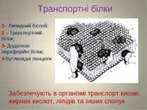 Транспортні білки 1- Липидний біслой; 2 – Транспортний білок; 3- Додаткові пе...