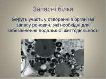 Запасні білки Беруть участь у створенні в організмі запасу речовин, які необх...