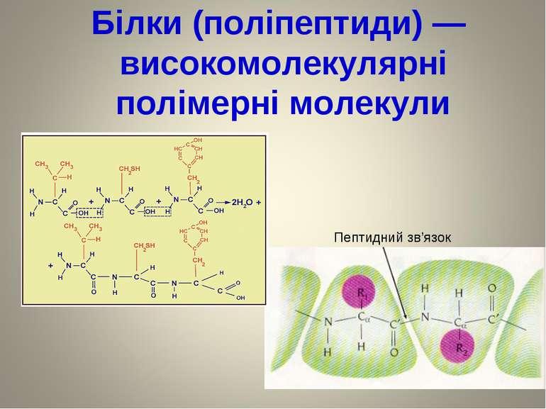 Білки (поліпептиди) — високомолекулярні полімерні молекули Пептидний зв'язок