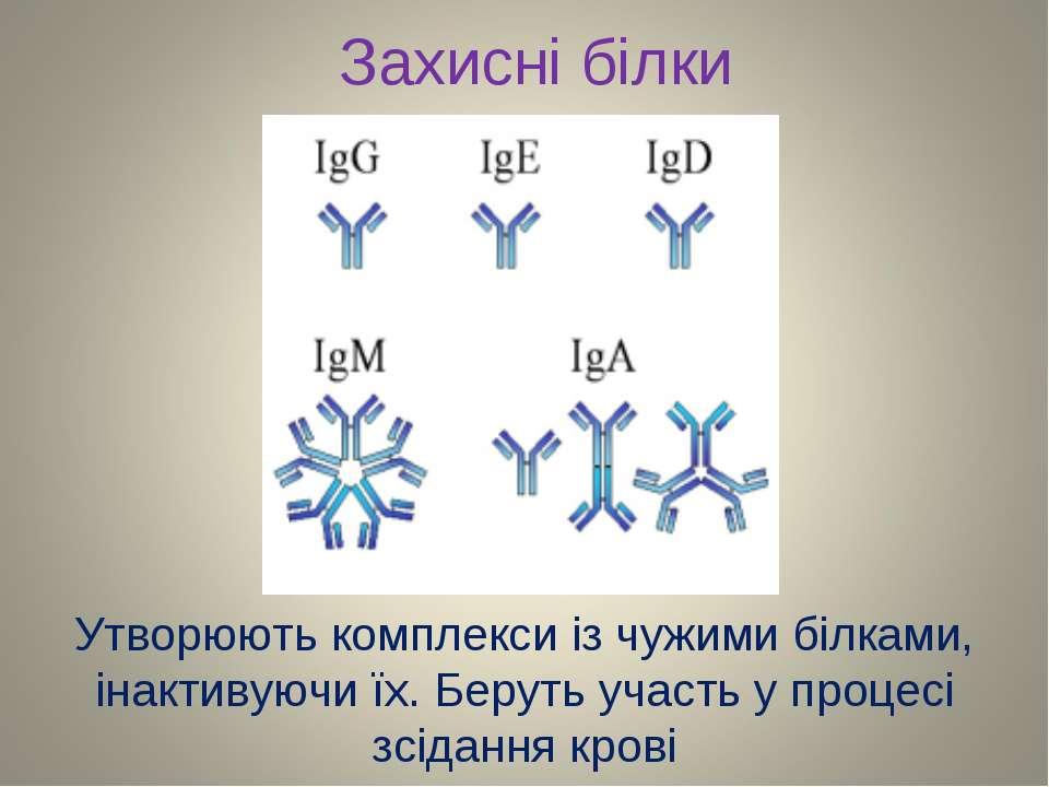 Захисні білки Утворюють комплекси із чужими білками, інактивуючи їх. Беруть у...