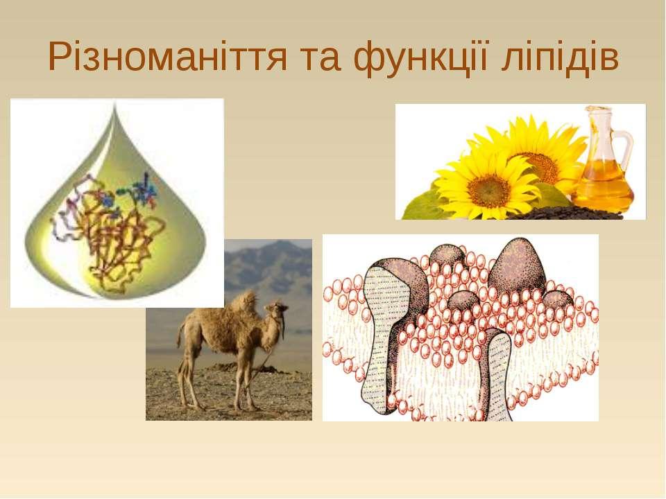 Різноманіття та функції ліпідів