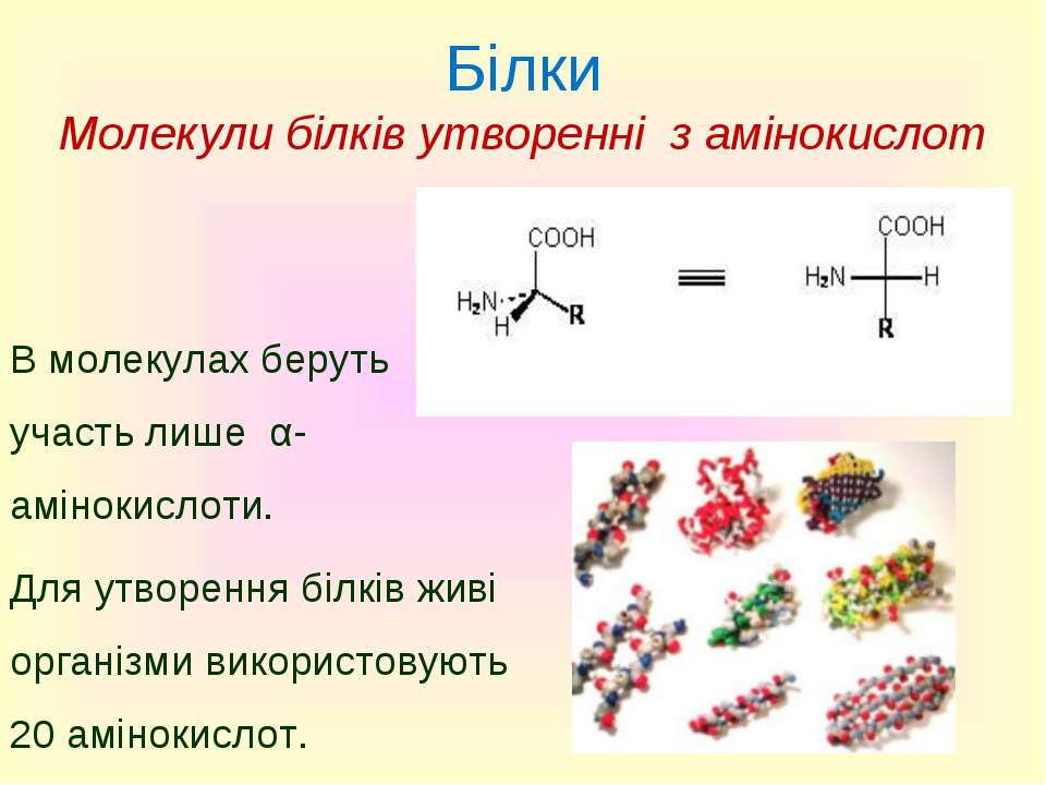 Білки Молекули білків утворенні з амінокислот В молекулах беруть участь лише ...