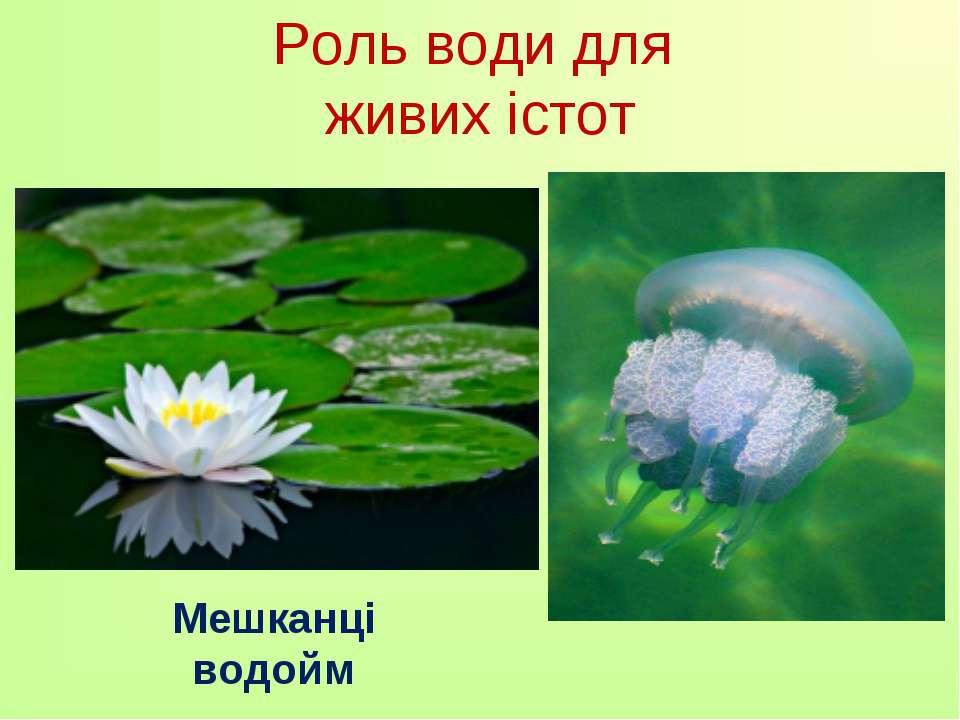 Роль води для живих істот Мешканці водойм