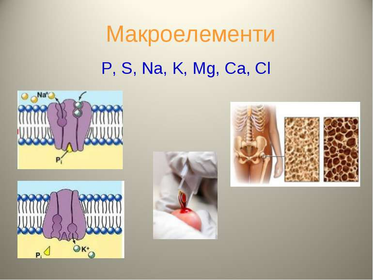 Макроелементи P, S, Na, K, Mg, Ca, Cl