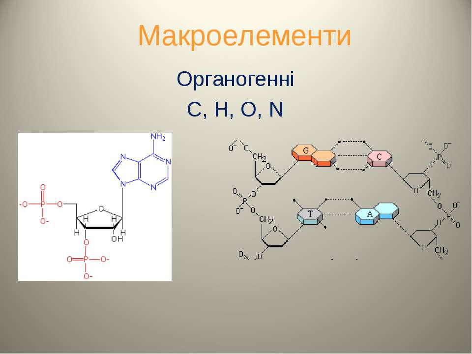 Макроелементи Органогенні C, H, O, N