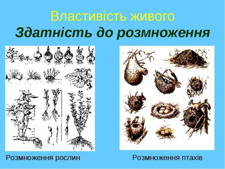 Властивість живого Здатність до розмноження Розмноження рослин Розмноження пт...