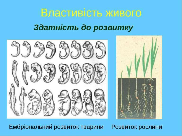 Властивість живого Здатність до розвитку Ембріональний розвиток тварини Розви...