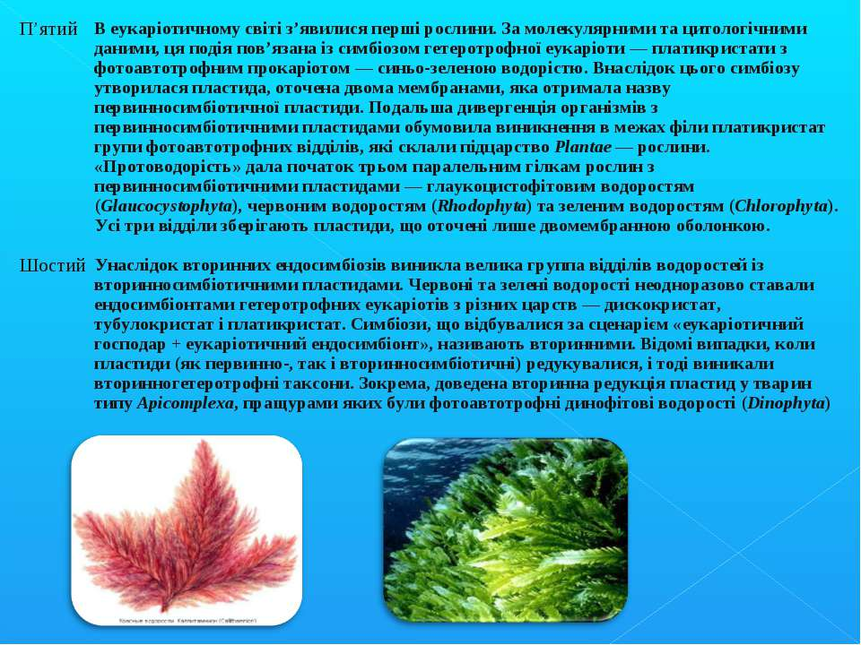 П'ятий В еукаріотичному світі з'явилися перші рослини. За молекулярними та ци...