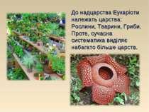 До надцарства Еукаріоти належать царства: Рослини, Тварини, Гриби. Проте, суч...