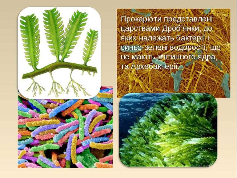 Прокаріоти представлені царствами Дроб'янки, до яких належать бактерії і синь...