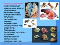 Біологічний прогрес характеризується розширенням ареалу, збільшенням чисельно...