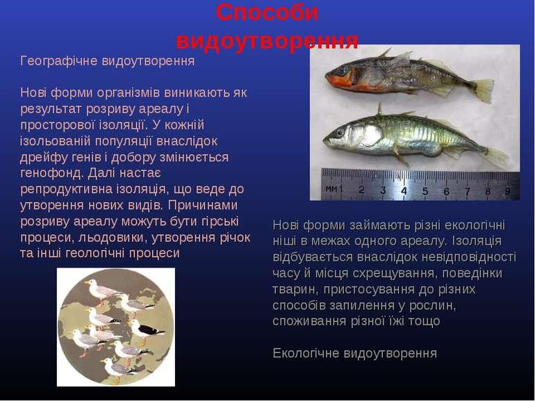 Способи видоутворення Географічне видоутворення Нові форми організмів виникаю...