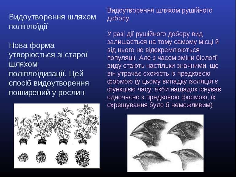 Видоутворення шляхом поліплоїдії Нова форма утворюється зі старої шляхом полі...