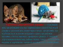 Харчовий (трофічний) ланцюг — узаємини між організмами під час перенесення ен...
