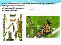 6. Розмістіть стадії розвитку метелика в послідовності від першої до останньо...