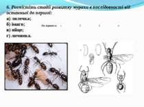 6. Розмістіть стадії розвитку мурахи в послідовності від останньої до першої:...