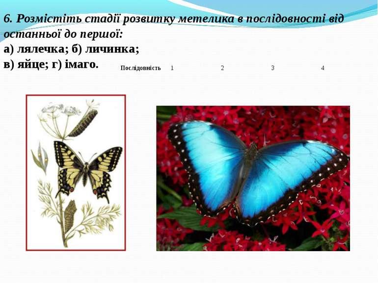 6. Розмістіть стадії розвитку метелика в послідовності від останньої до першо...