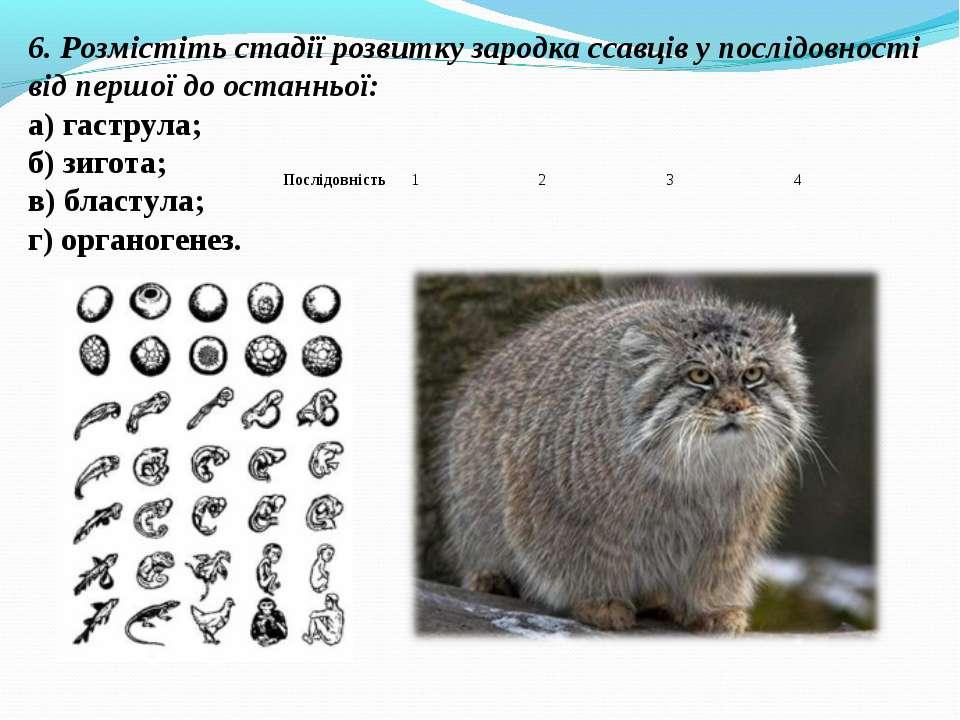 6. Розмістіть стадії розвитку зародка ссавців у послідовності від першої до о...