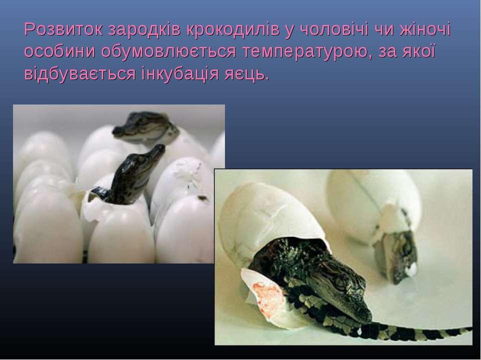 Розвиток зародків крокодилів у чоловічі чи жіночі особини обумовлюється темпе...