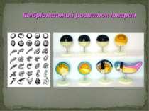 Ембріональний розвиток тварин
