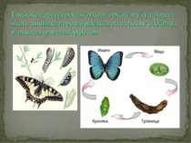 Глибоке перетворення будови організму, у процесі якого личинка перетворюється...