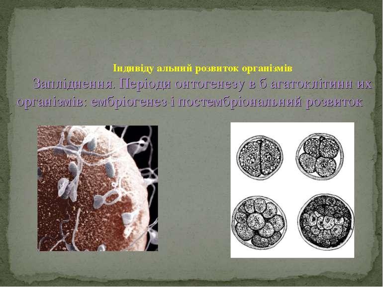 Індивіду альний розвиток організмів Запліднення. Періоди онтогенезу в б агато...