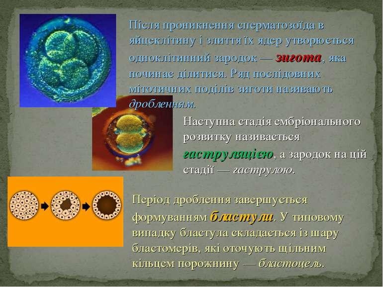 Наступна стадія ембріонального розвитку називається гаструляцією, а зародок н...
