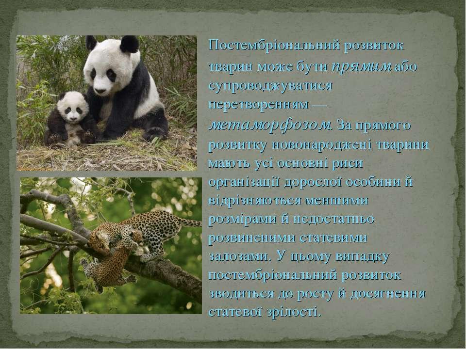 Постембріональний розвиток тварин може бути прямим або супроводжуватися перет...