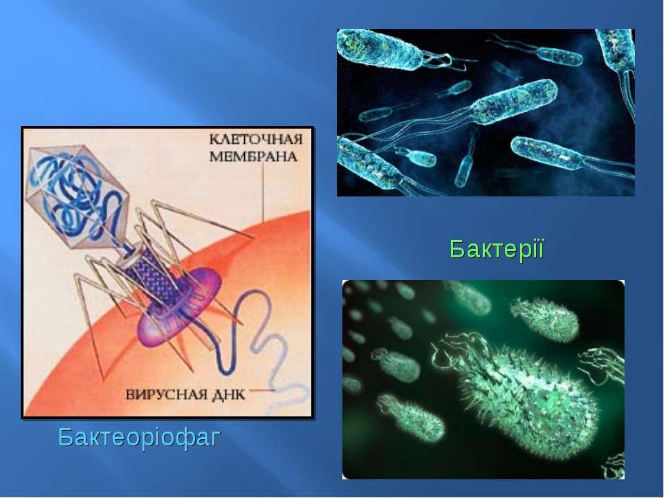 Бактеоріофаг Бактерії