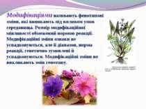 Модифікаціями називають фенотипові зміни, які виникають під впливом умов сере...