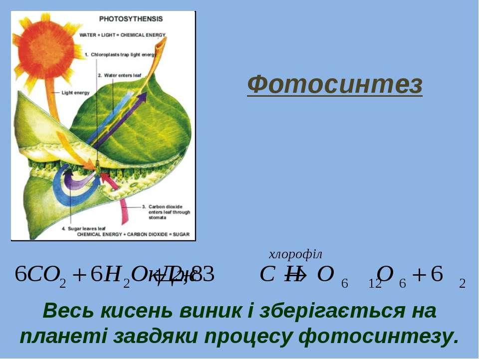 Весь кисень виник і зберігається на планеті завдяки процесу фотосинтезу. Фото...