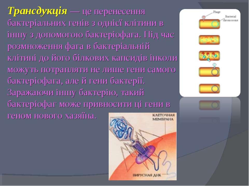 Трансдукція — це перенесення бактеріальних генів з однієї клітини в іншу з до...