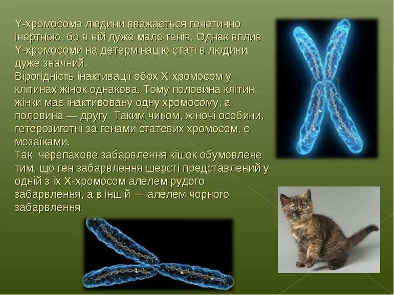 Y-хромосома людини вважається генетично інертною, бо в ній дуже мало генів. О...