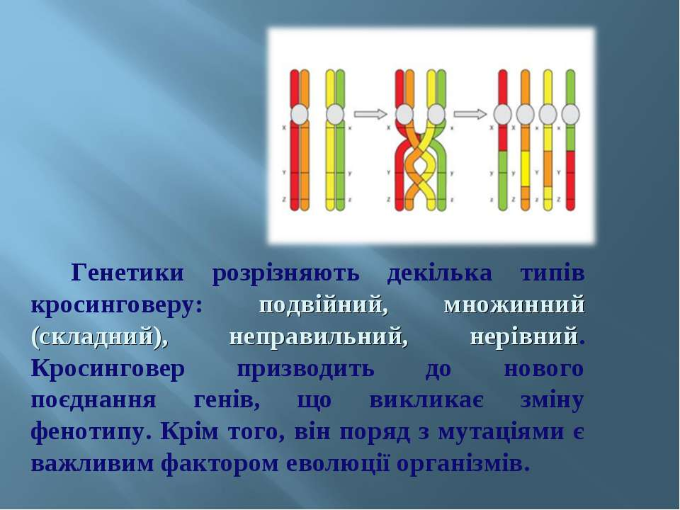 Генетики розрізняють декілька типів кросинговеру: подвійний, множинний (склад...