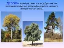 Дерева- великі рослини, в яких добре помітно головний стовбур, що зазвичай г...