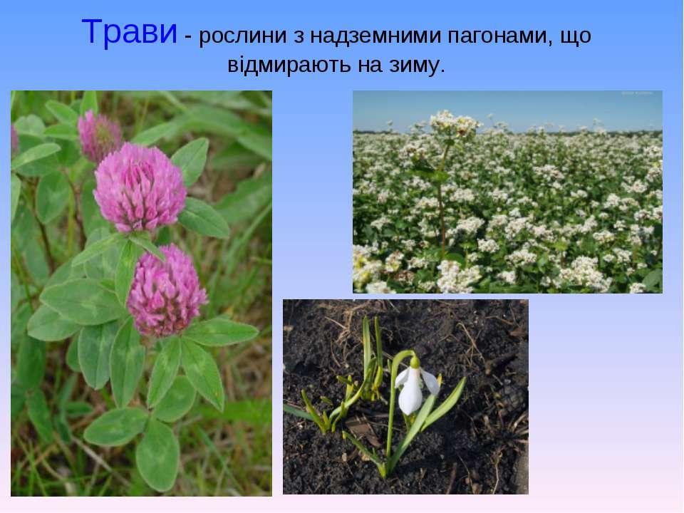 Трави- рослини з надземними пагонами, що відмирають на зиму.