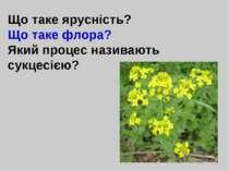 Що таке ярусність? Що таке флора? Який процес називають сукцесією?