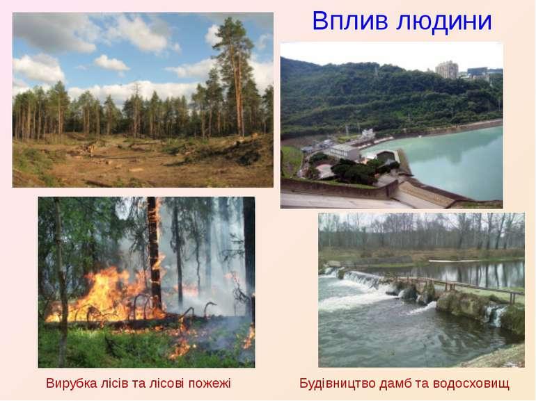 Вплив людини Вирубка лісів та лісові пожежі Будівництво дамб та водосховищ